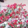 手工活外放,手工塑料花